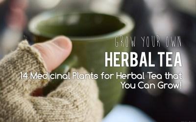 PNW Medicinal Tea Garden – 14 medicinal plants for herbal tea that you can grow!