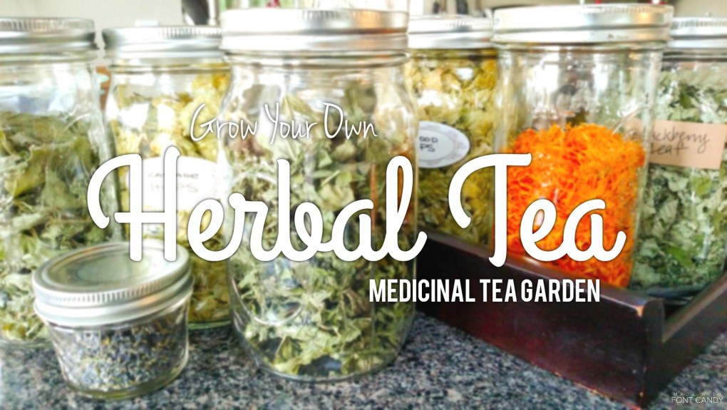PNW Medicinal Tea Garden - 14 medicinal plants for herbal tea that you can grow!