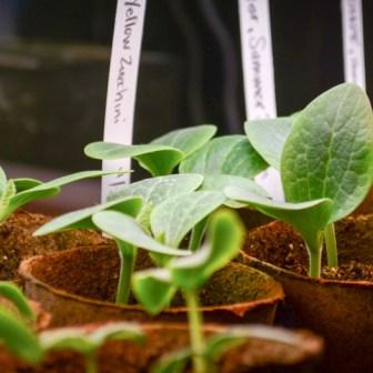 DIY Garden Planting Calendar - Hands Down the Most Time-Saving Section of My Garden Journal - PNW from Scratch_4