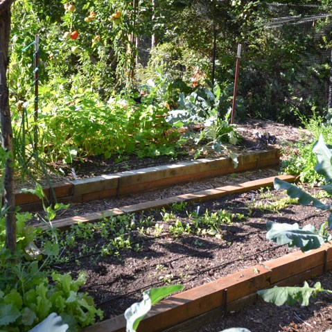 DIY Garden Planning with a Planting Calendar
