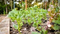 May in the PNWfromScratch Garden 2016_19
