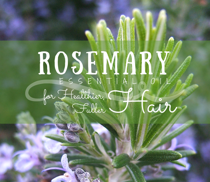 Rosemary Essential Oil for Healthier, Thicker Hair