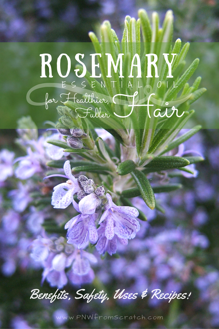 Rosemary Essential Oil for Thicker Hair - Benefits, Safety, Uses & Recipes!