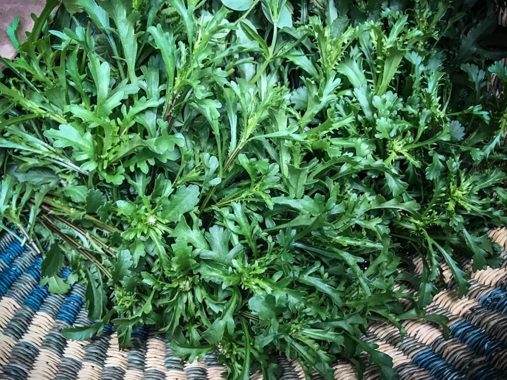Edible Oxeye Daisy (Chrysanthemum leucanthemum)