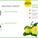 Apex Vitality Garcinia Cambogia Plus Review – Can It Burn Fat Levels?