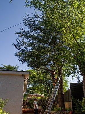 trabajos verticales de podas