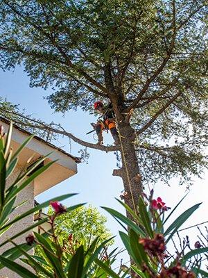 Cuidado de árboles madrid