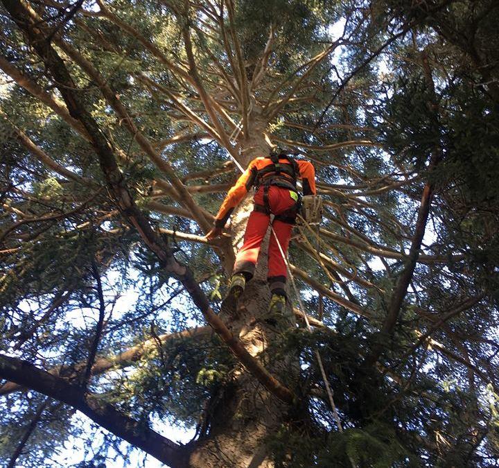 Eliminando ramas secas