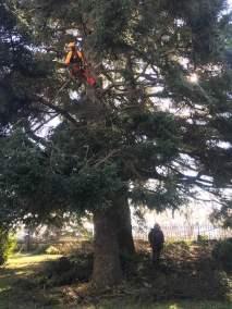 eliminación de ramas secas El Escorial