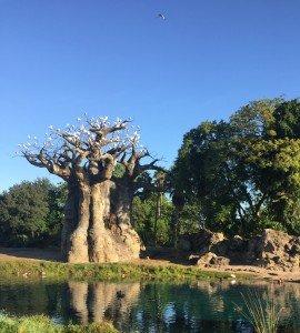 An upside-down tree