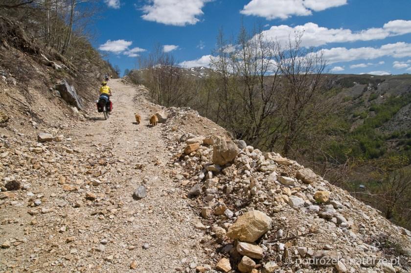Jeszcze przed wsią Boričje dołączają do nas dwa rude psy
