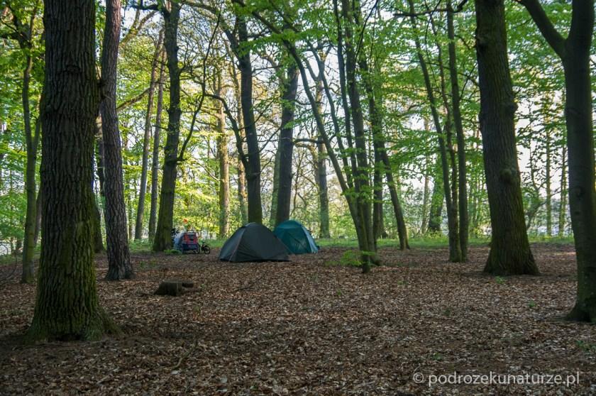 Nocujemy w lesie