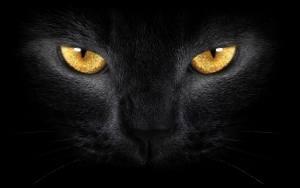 PageLines- BlackCat.jpg