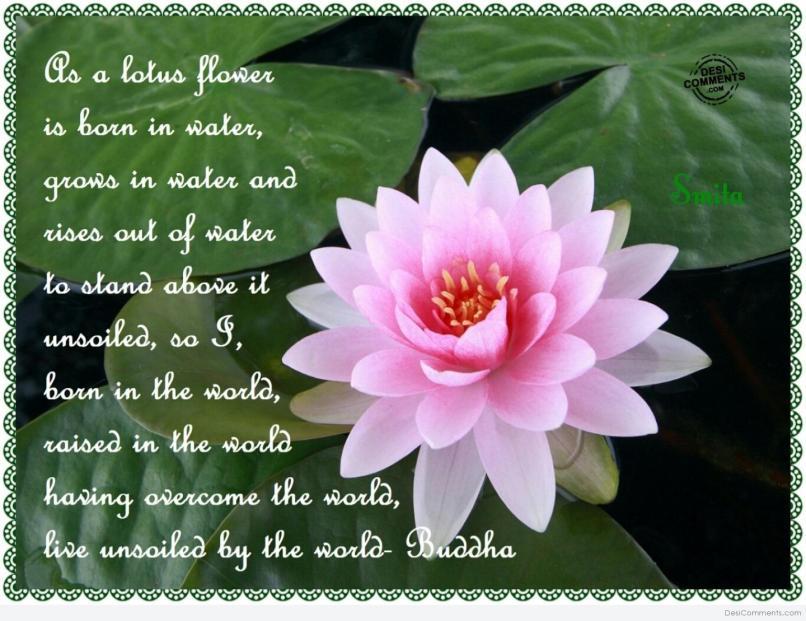 Flower Poem In Marathi Wajiflower