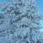 Зимние, новогодние