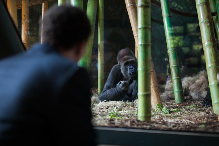 Regenstein Center for African Apes Wedding Reception
