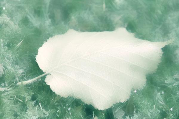 Healing Words, Frost - Gil Dekel