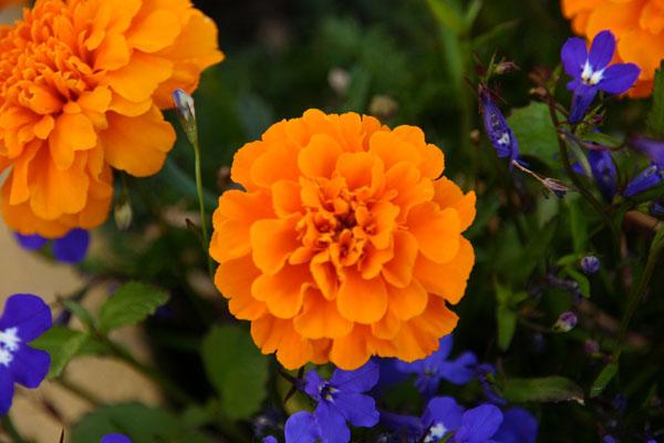 Flowers1 - Gil Dekel