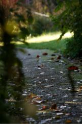 Path-Gil-Dekel-2013