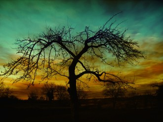 setting-tree