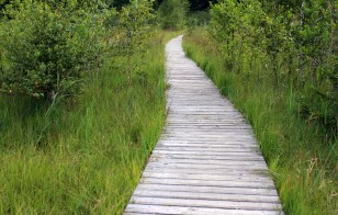 wooden-track-forest