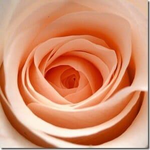 Bloom Once Again