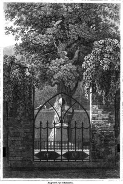 korner's oak
