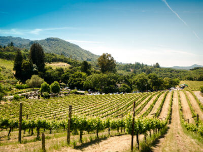 Epirus Wine Region | Wine Route of Epirus | Wine growing area of Epirus