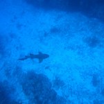 Blue Dive: Scuba Diving Belize