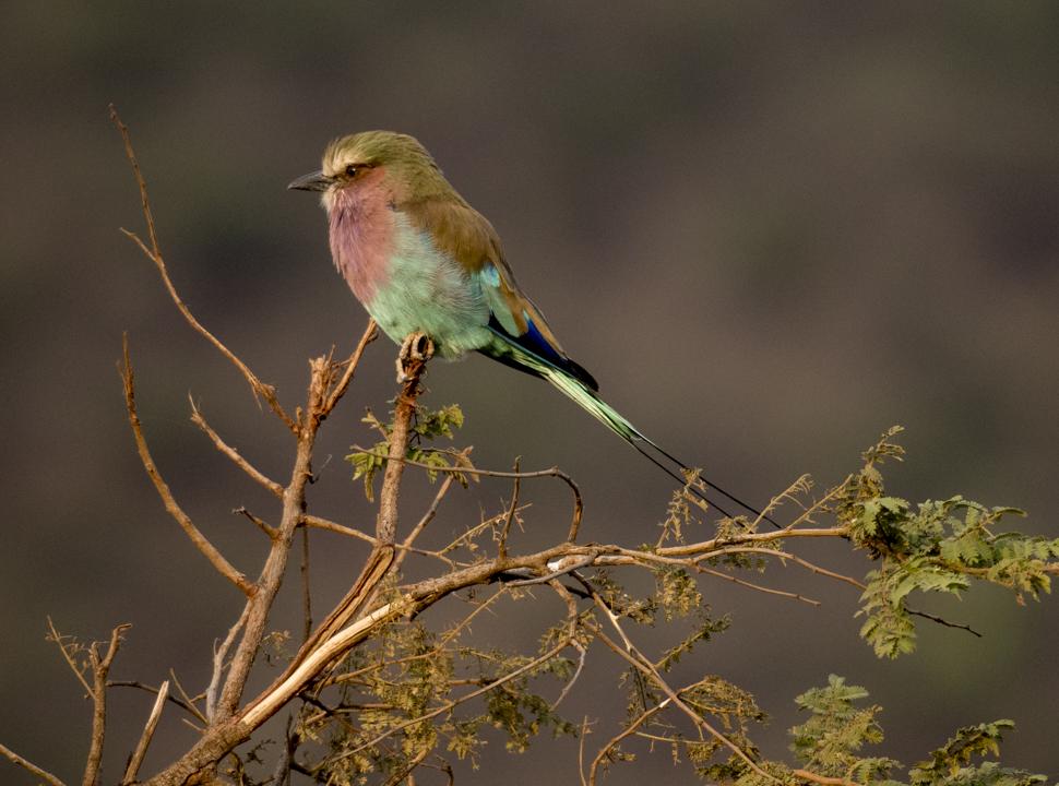 Seduced by the Serengeti, Africa, the Serengeti