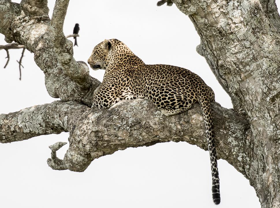 Seduced by the Serengeti, Africa, African Safari, the Serengeti, Tanzania Safari