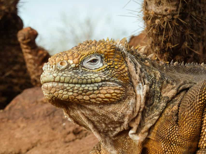 Best Time to Visit the Galapagos, best time to travel to galapagos, best time of year to visit Galapagos, best time to go to Galapagos Islands, Best time to visit the Galapagos Islands,