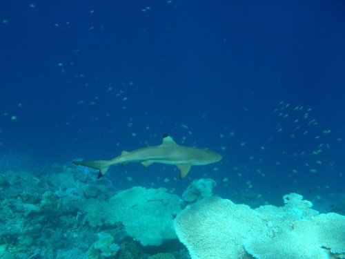 snorkeling sunset hotel review park hyatt maldives male beach resort luxury island overwater villa pool shark