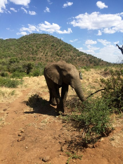 Safari at Pilanesberg National Park and Game Reserve