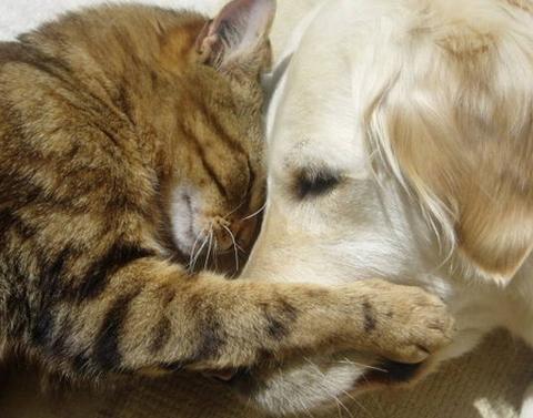 cat,dog,photo,cute,lovely,animal,cat,dog