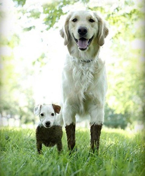 Mud pie makers two dogs