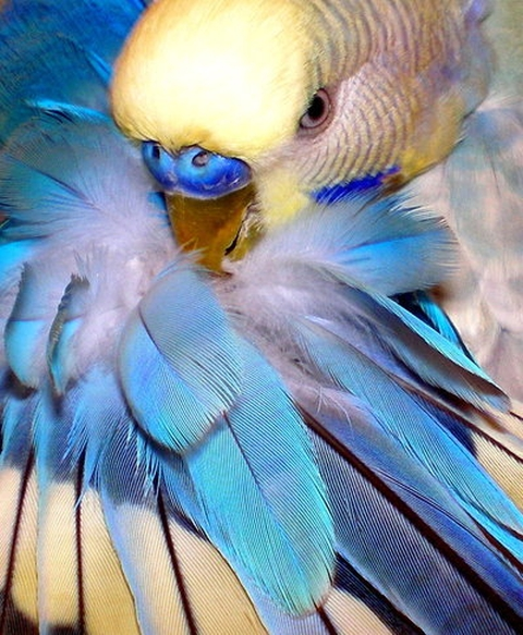 beautiful colorful bird parakeet
