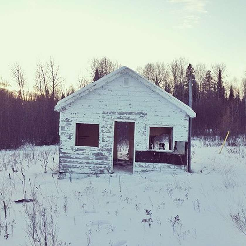 dog in empty abandoned house in snow winter