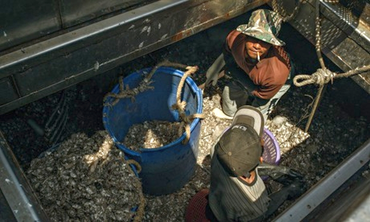 Thailand seafood industry and slavery : Thai 'trashfish' workers unload trashfish for shrimps