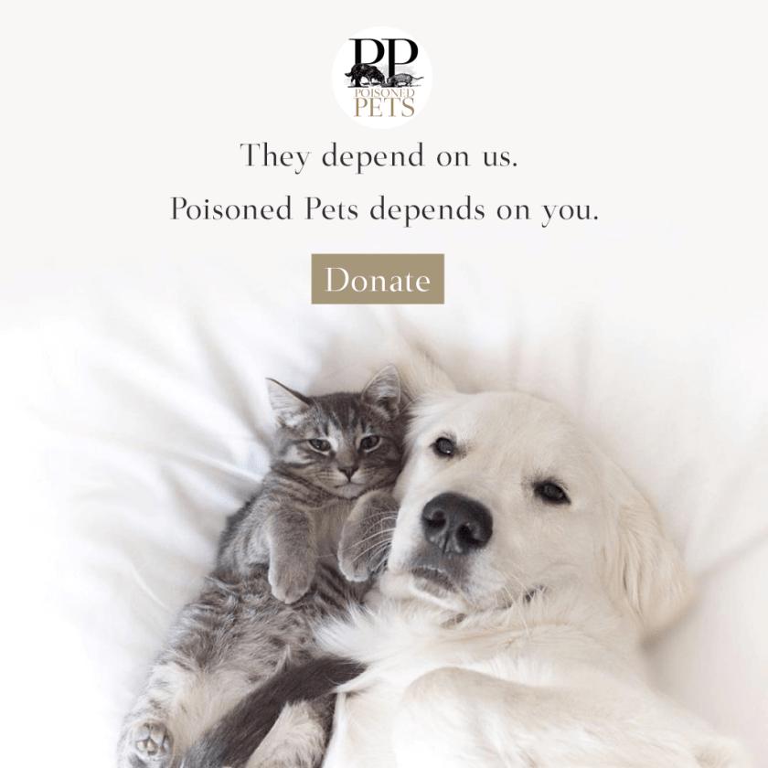 dog-and-cat-snuggle-plea