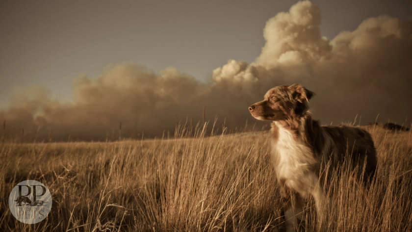 recall dog food darwin's lonely_dog_in_the_windy_field_clouds