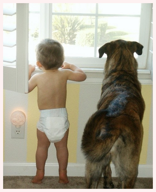 sweet baby and dog at window waiting and watching
