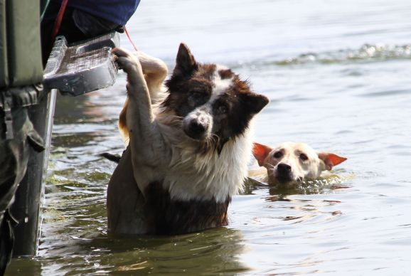 pets hurricane sandy victims dogs flood rescue