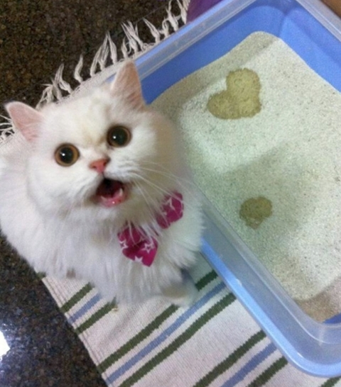 Cat with heart shaped pee