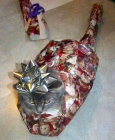 Cat Christmas present funny animals picture