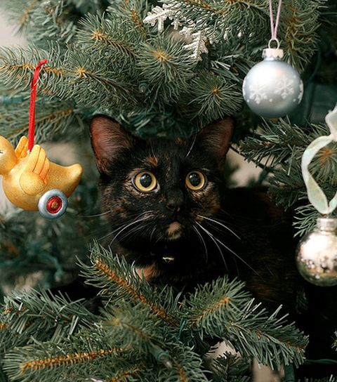 stress company - Are Christmas Trees Poisonous To Cats