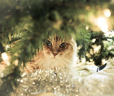 cat-christmas-christmas-tree-glitter-golde-Favim.com-309776