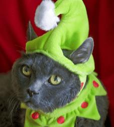 cat elf hat