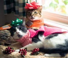 christmas-cats-tn-800-3