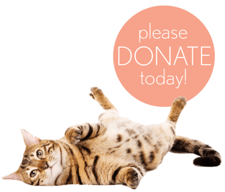 donate to poisoned pets today